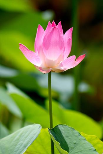Comprehensive Yoga Fellowship Teacher Training Lotus Flower